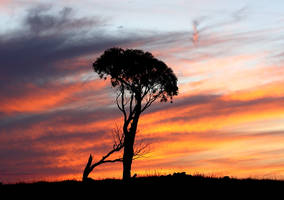 Lonely tree IV by Freya7