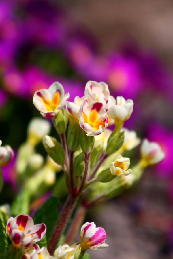 Spring flowers 11 by Freya7