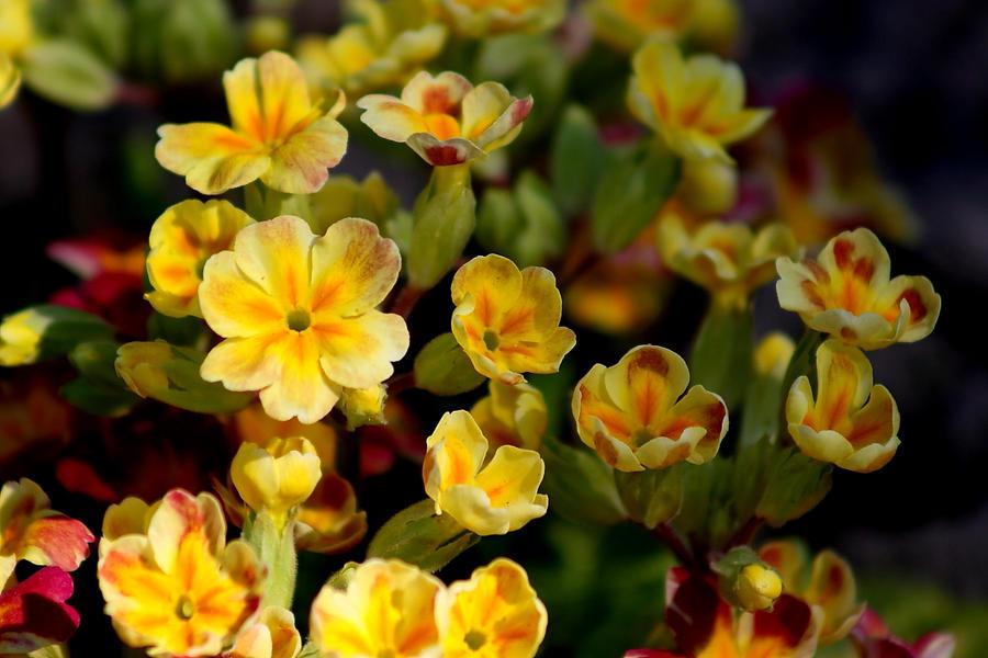 Spring flowers 14