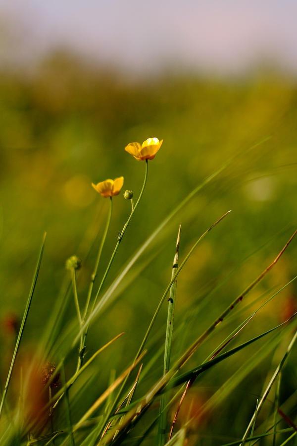 Spring... by Freya7