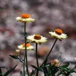 Spring flowers 16 by Freya7