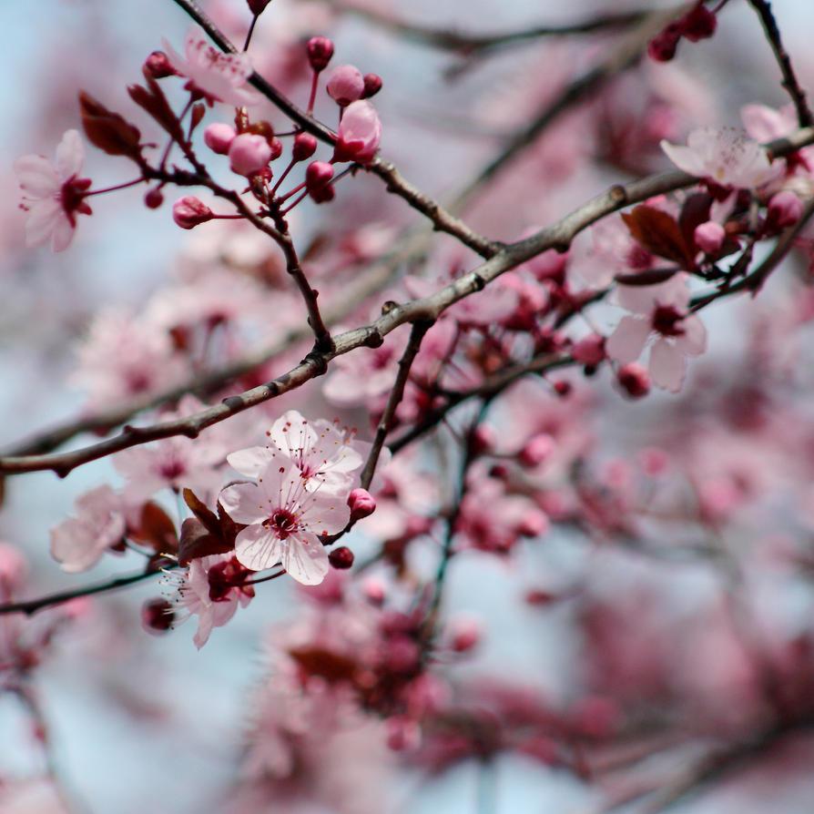 Spring impressions by Freya7