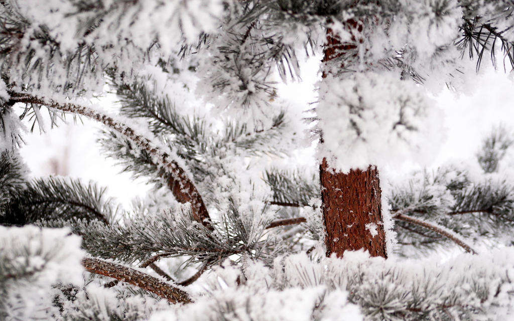 Winter by Freya7