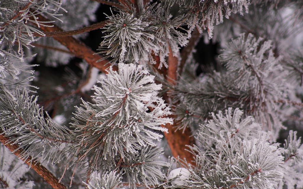 Winter II by Freya7