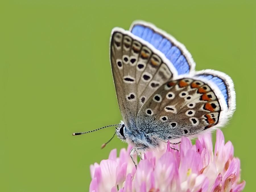 blue wings by StyxCornix