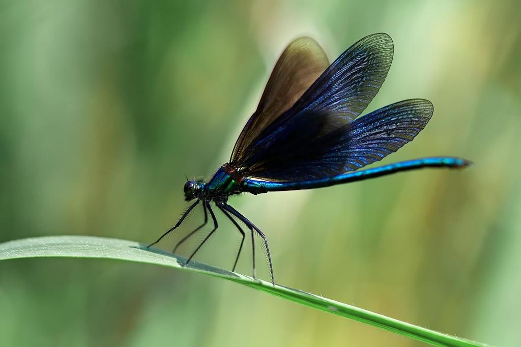 Beauty of the pond by StyxCornix