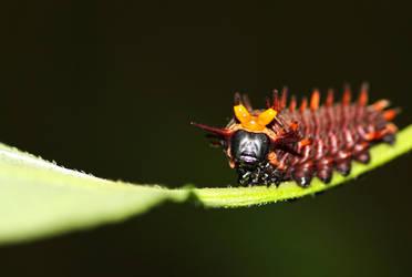 Samurai Caterpillar by SamVN