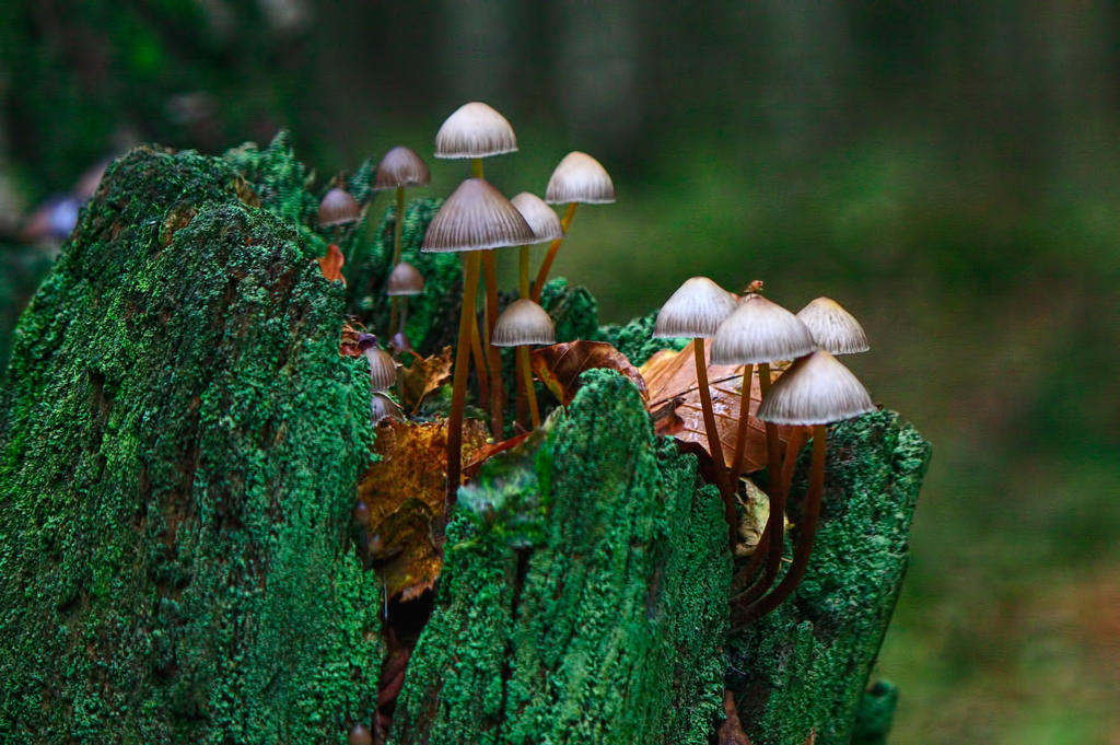 Tantalizing Toadstools Take 2! by SamVN