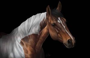 Com: Cheyenne by Naia-Art