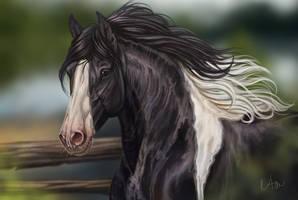 -= Com: Widowmaker =- by Naia-Art
