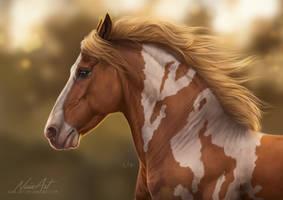 -= Com: Zaffire =- by Naia-Art