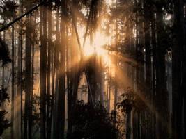 Sun breaking by MartinGollery
