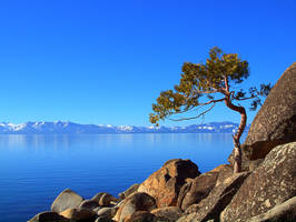 Leaning Tree by MartinGollery