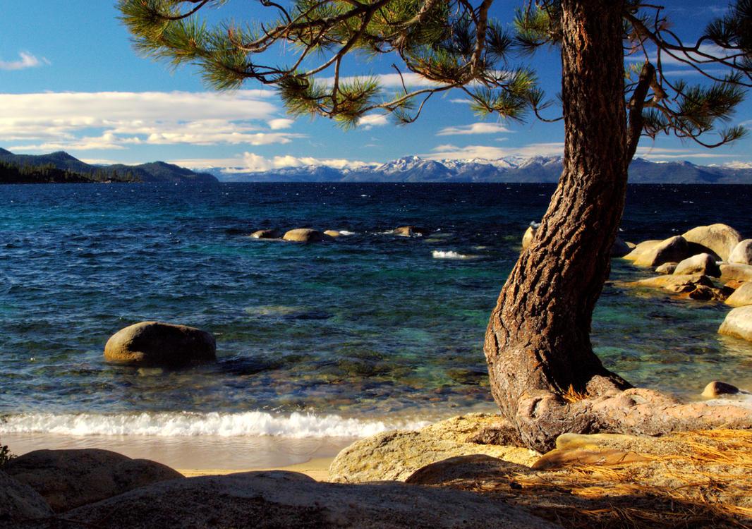 Hidden Beach Tree by MartinGollery