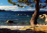 Hidden Beach Tree