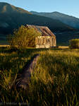 Shack by MartinGollery