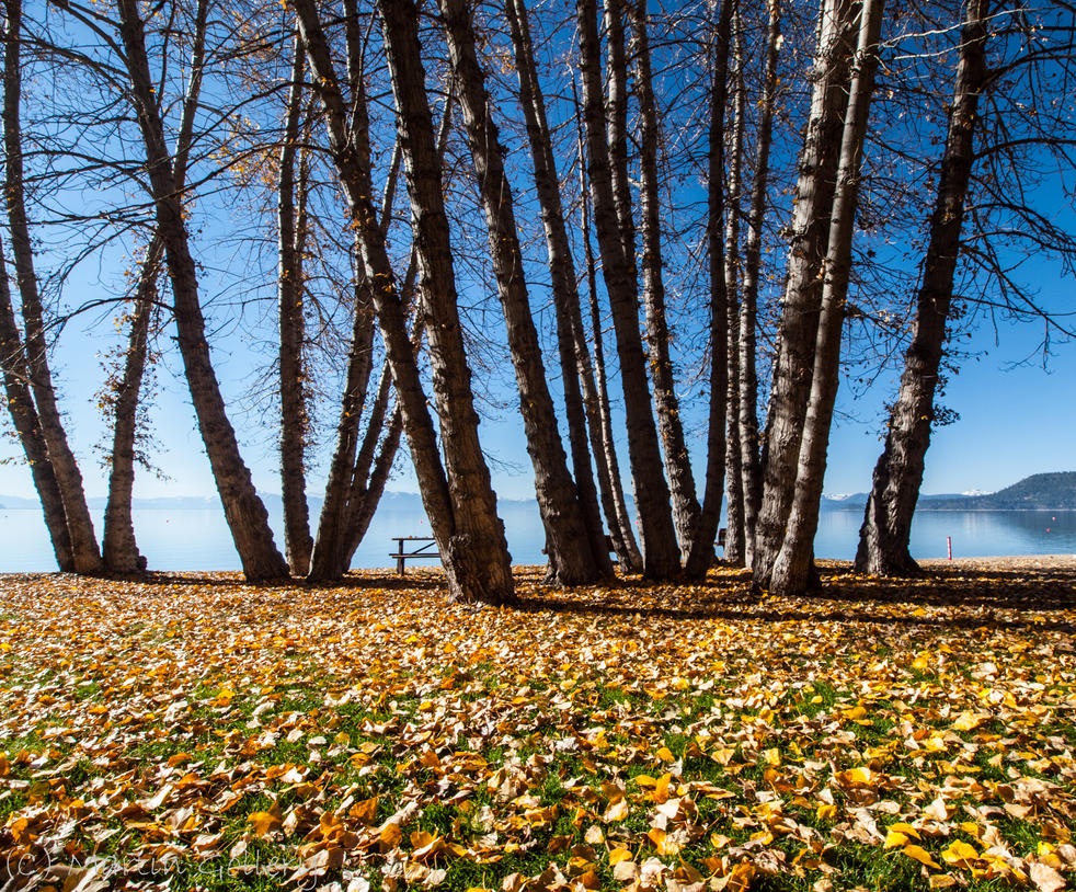 Fall Beach by MartinGollery