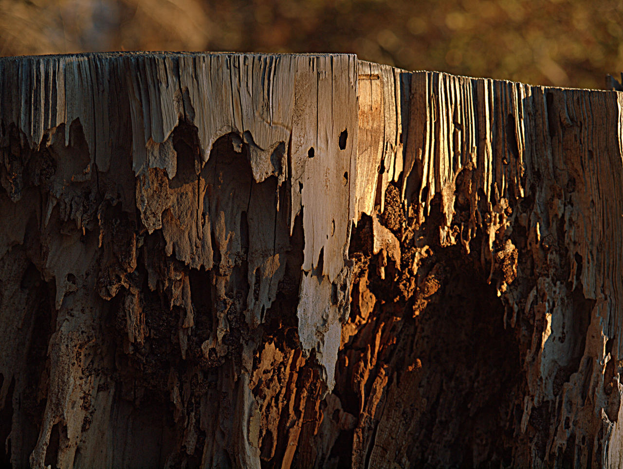 Stump by MartinGollery