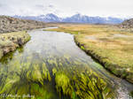 hot Creek 150406-104 by MartinGollery