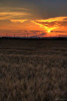 through the wheat field by seraphRo