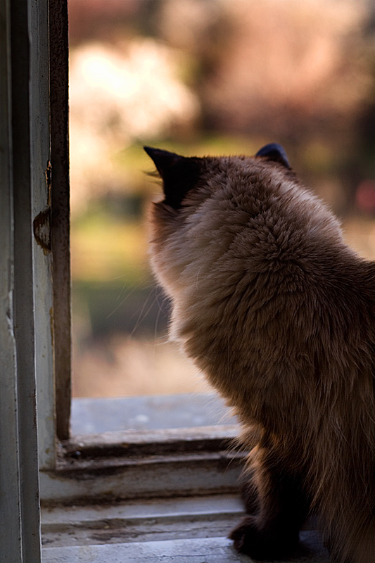 cat by the window 2 by seraphRo