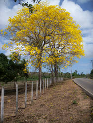 Pipa Road