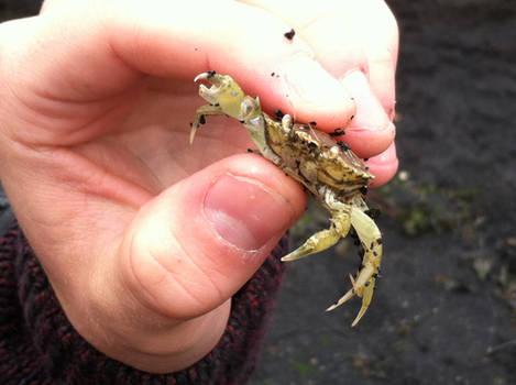 Crab on a beach 2