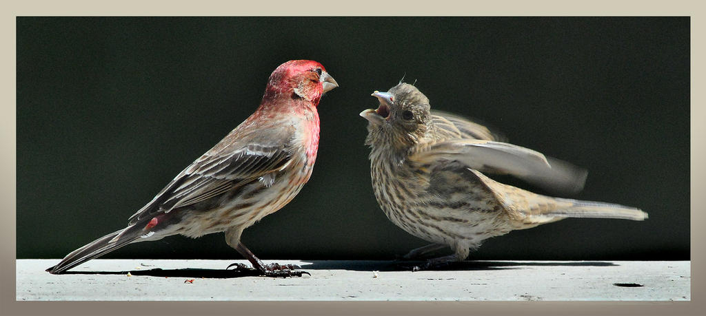 Finch Feed by richardcgreen