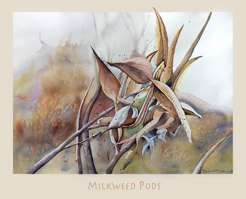 Milk Weeds Pods
