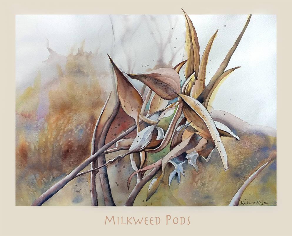 Milk Weeds Pods by richardcgreen