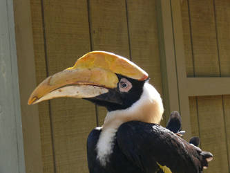 The Hornbill by FFRedXIII