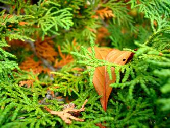 green autumn by dheeka