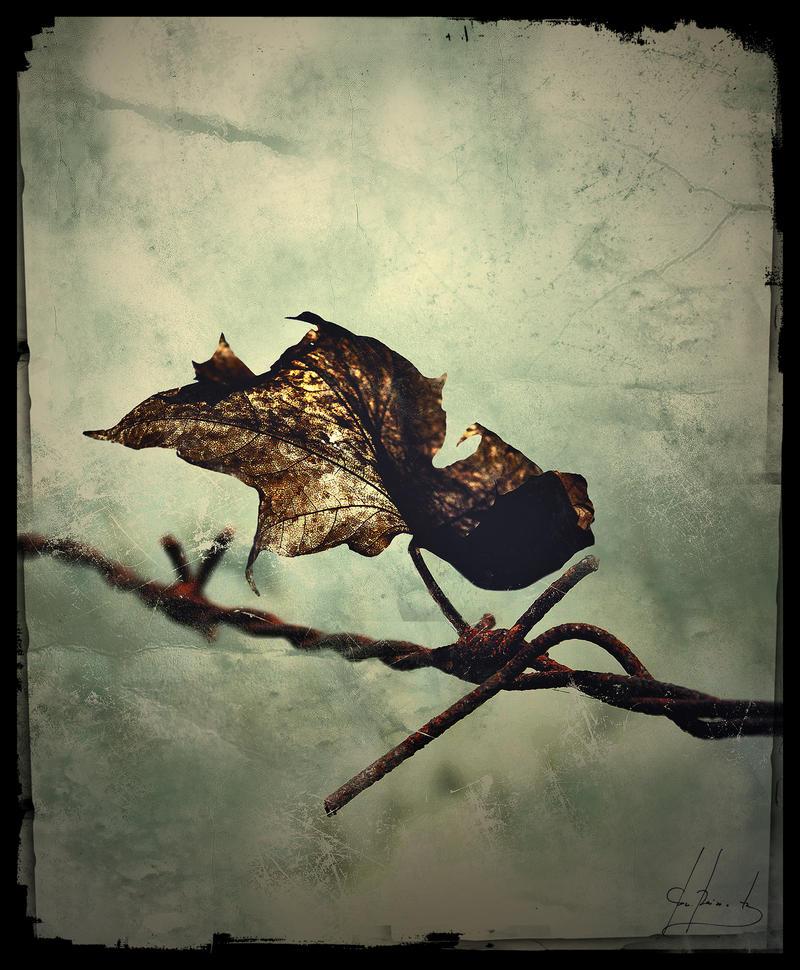 Requiem Of Sorrow by IrondoomDesign