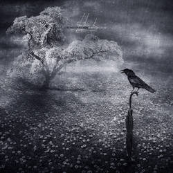 A Winter Crow by IrondoomDesign