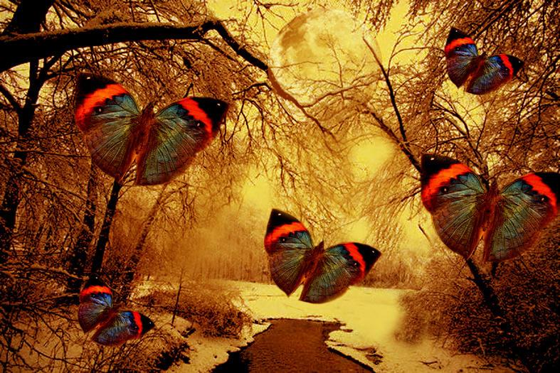 Bienvenidos al nuevo foro de apoyo a Noe #201 / 12.12.14 ~ 14.12.14 - Página 3 The_butterfly_nature