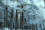 invierno azul..