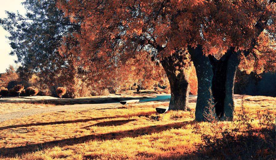los arboles de cobre.. by kriakao