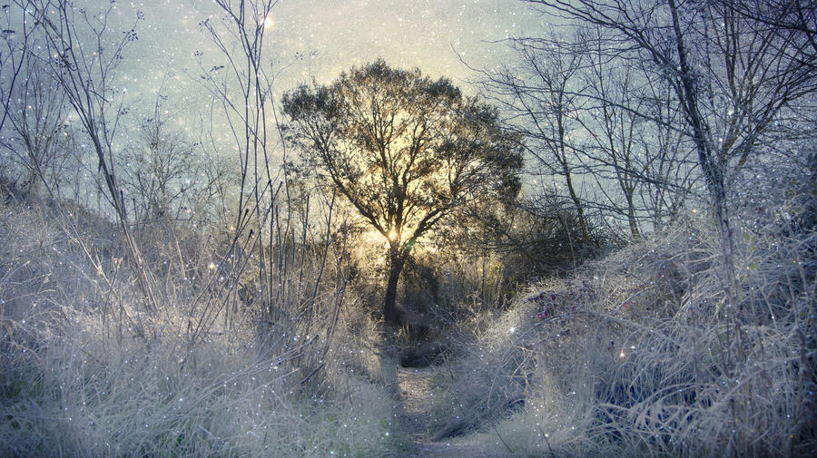 frosty morning by kriakao
