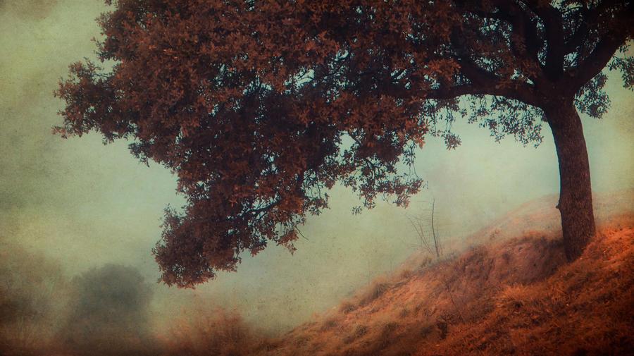 por amor a la niebla.. by kriakao