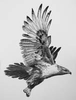 Dream of Flight by billharrison