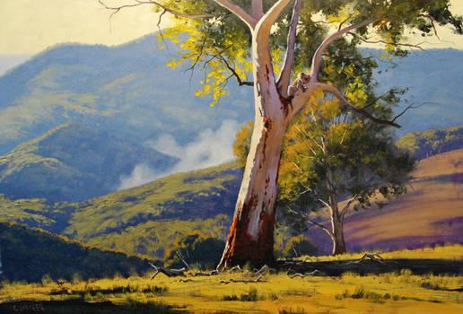 koala gum tree