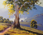 Australian Gum Tree, Bathurst