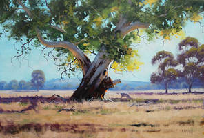 Australian Summer by artsaus