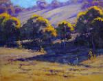 Australian summer Colours