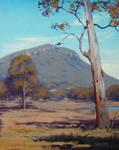 Australian Summer Landscape