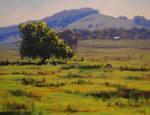 Hunter  Valley Landscape
