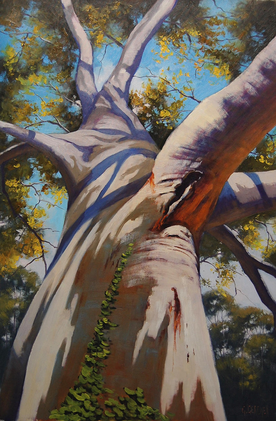 Australian Gum Tree Portrait by artsaus