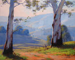Australian Gum trees