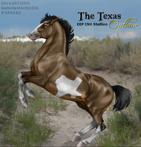 The Texas Outlaw - EEP ISH Stallion by CloverHoofAcres
