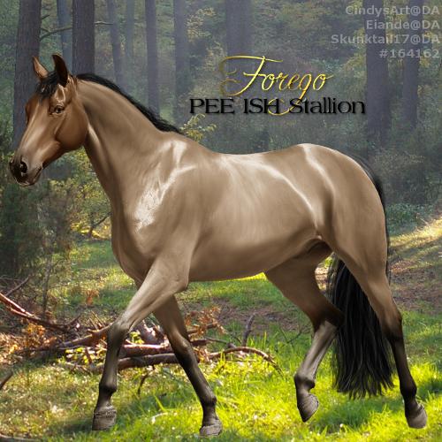 Forego - PEE ISH Stallion by CloverHoofAcres